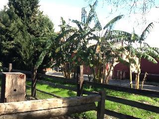 Az.agricola Neocastrum, Lamezia Terme