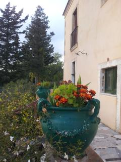 Flower pot on the balcony