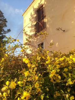 st Joseph jasmin in march