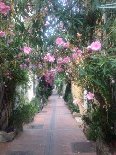 Nearby streets where with  lots of beautiful flowers and old houses to explore enroute to restaurant