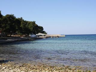 Pini marittimi lungo le spiagge riparano dal sole