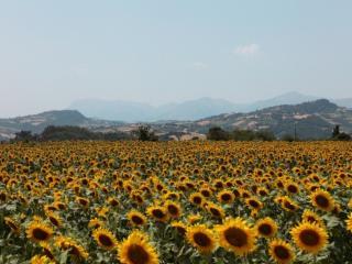 AGRITURISMO BONFIGLI, Falerone