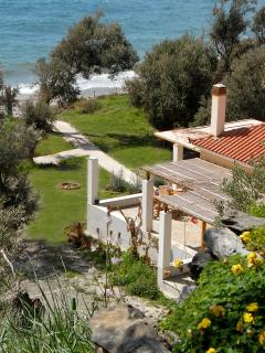 House and olive grove view in the springtime
