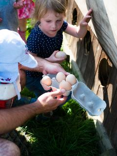 Morning Egg collecting at Court Farm