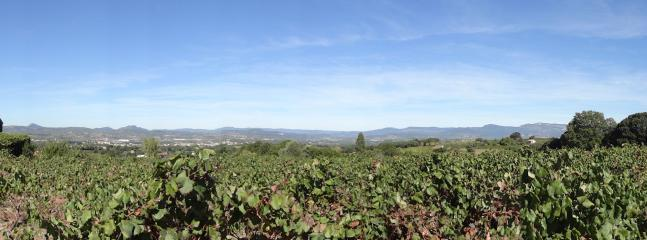 Vineyards surrounding Le Pouget