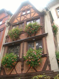 Alsatian geraniums