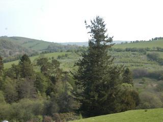 View from yurt