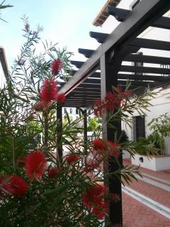 Community Gardens and andalusian square and fountains  at urbanization