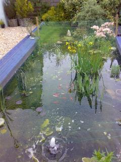 Aquatics Pond