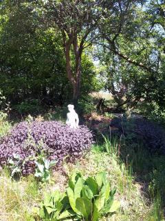 Summer view of garden