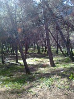 fantastic walks through the pine forests around El  Chorro and the Ardales Lakes