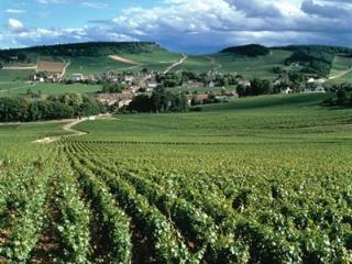Vignoble de Chablis