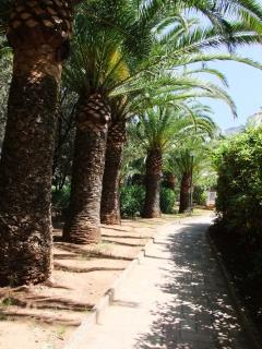 Palm lined, pathway to the house