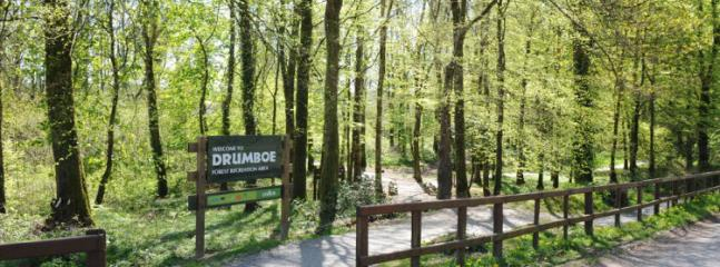 Drumboe Woods,