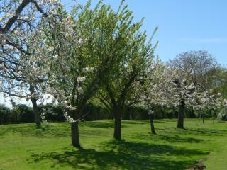 The Cherry Orchard at Le Gite Tranquille