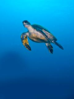 Diving with turtles!