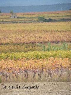The vineyards around St Genies de Fontedit