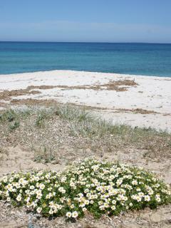 appreciate the special combination of a quartz beach with spring daisies