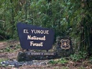 Nära El Yunque regn Forrest.