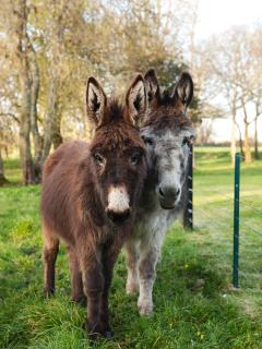 Jenny and Pippa the Donkeys