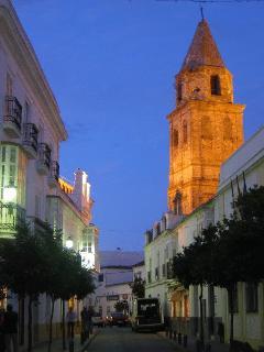 tree lined street in Medina