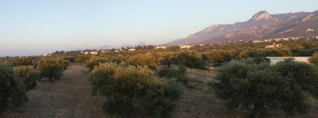 Stunning Olive Grove, that the Villa looks over