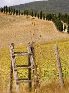 Umbria-Tuscany local views