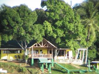 Terrace view and Casa Amarilla's mango trees