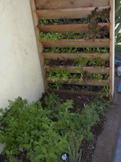 Herb garden & vertical planter right of kitchen door