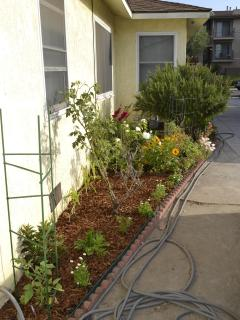 Vegetable, herb & flower garden with rosemary 'tree' next to last picture