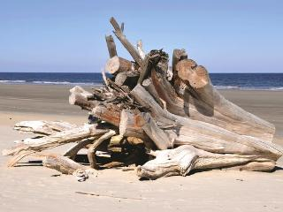 DRIFTWOOD JEKYLL ISLAND TAKE BRIDGE OVER LESS THAN 4 MILES