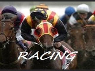 Cavallo da corsa divertente