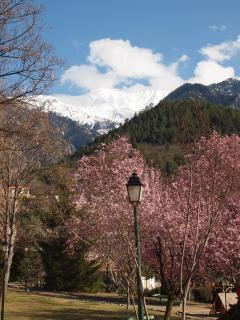 Snow capped Mt. Canigou in Spring, the area is beautiful with Cherry, Peach and Apricot blossom.