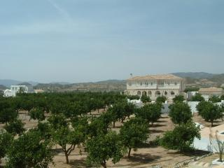 The Villa is set within orange groves