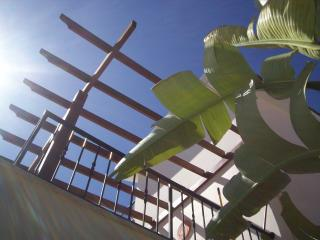 Looking through the Banana Tree to the Terrace with Pergola which has a full shade fitted