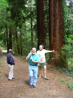 The Giant Redwood forest