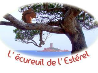 L'Ecureuil de l'Estérel, Saint-Raphael