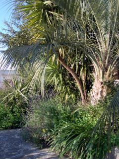 angolo del giardino con palme e lavanda