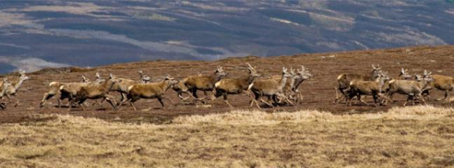 red deer roaming surrounding hilltops