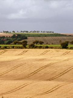 Harvest time around Kinsale.