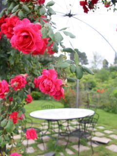 rose sotto il gazebo