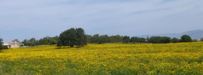 The surrounding area is quite beautiful. Here are some spring flowers in Neo Chorio.