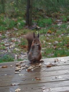 Local resident enjoying dinner on the decking