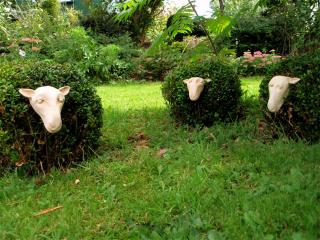 Box Sheep (by Carmen Wenner)