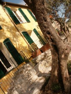 One of the olive trees in front of the house