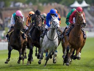 Chester Races a short walk from the River House luxury holiday cottage for six adults