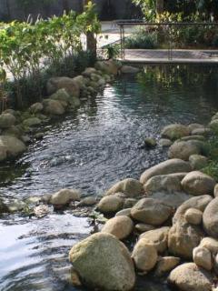 Garden - Pond