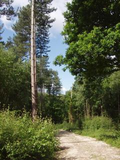 Kemphill Woods. Lovely walk in our woodland along 1.6 mile of track.See a  Red Squirrel