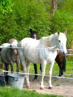 possibilité d'accueil pour les chevaux
