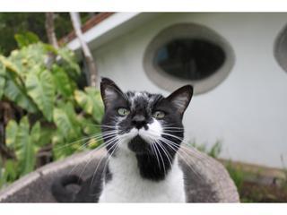 Clara: Animais de estimação são bem-vindos! #petfriendlyhotel #petfriendly